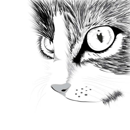 Negro silueta de gato ilustración vectorial