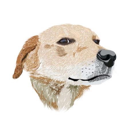 Dog head - hand drawn illustration Vector