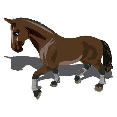 brown horse: Beautiful brown horse