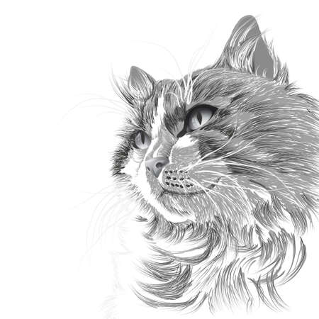 moggie: Illustration head of a grey cat Illustration
