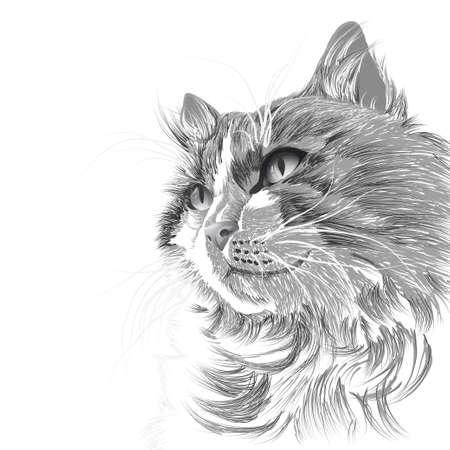 heads: Illustration head of a grey cat Illustration
