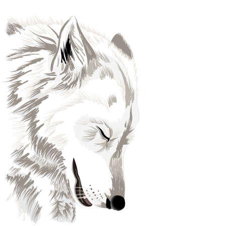 lobo: Cara del lobo Vectores