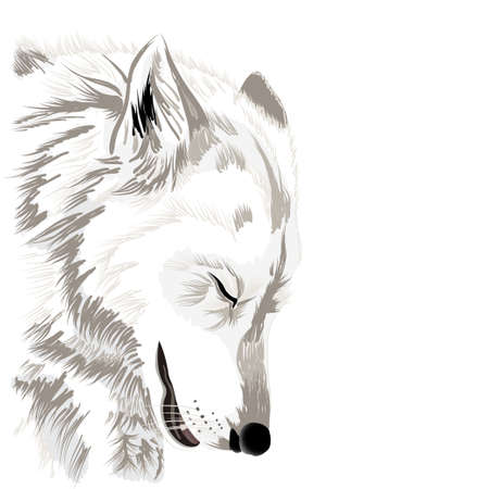 dog nose: Wolf face