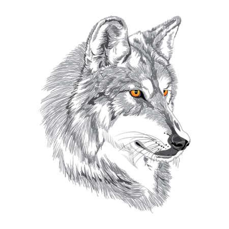 オオカミの銃口のスケッチ  イラスト・ベクター素材