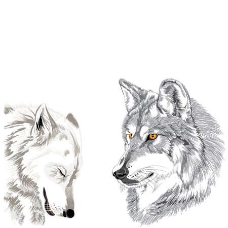 オオカミ グリグリ スケッチ