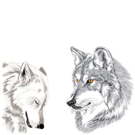 gray wolf: Wolves muzzles sketch