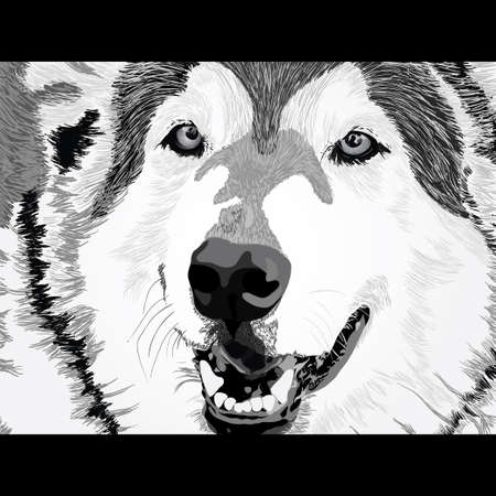 close up eye: Vector portrait of angry wolf face