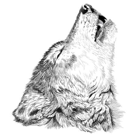 オオカミが遠ぼえするスケッチ  イラスト・ベクター素材