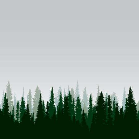 arbol de pino: Panorama de los bosques de coníferas salvaje Vectores