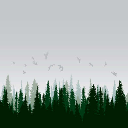arbol p�jaros: Panorama de los bosques de con�feras salvaje Vectores