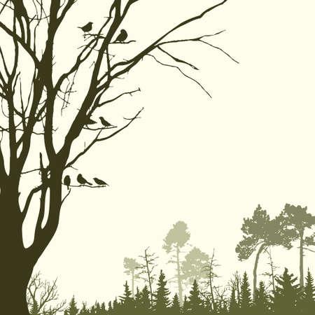 animales del bosque: Panorama de los bosques de con�feras salvaje Vectores