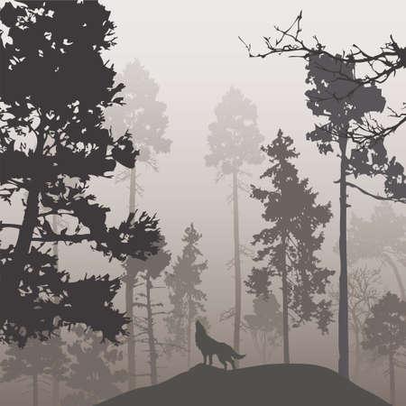 lobo: Bosque de pinos y el lobo