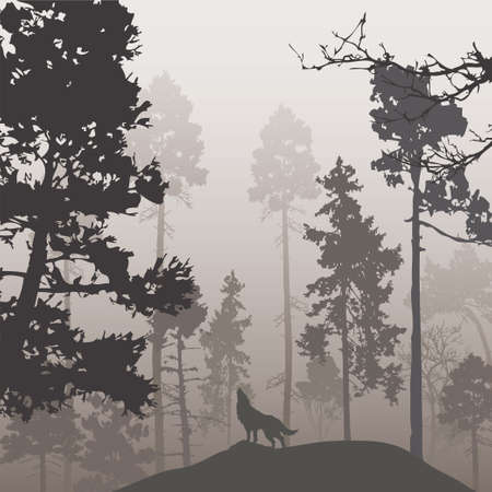 Pine forest and the wolf