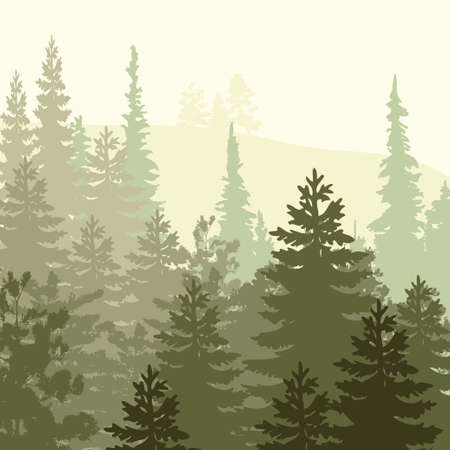 pine tree silhouette: Panorama of wild coniferous forest Illustration