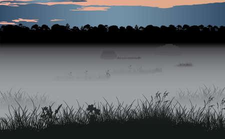 for�t r�sineux: Foggy marais et la for�t de conif�res sauvage. Vecteur ilustration