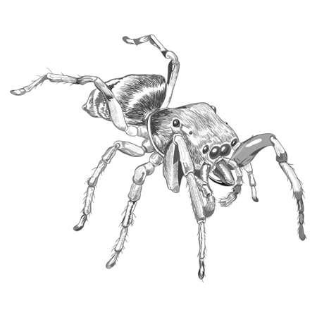arthropods: Drawn Black spider animal illustration
