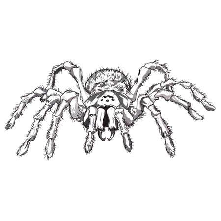 spidery: Drawn Black spider animal illustration
