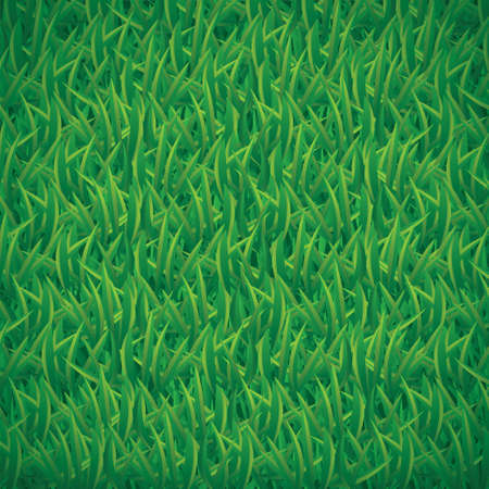 land plant: Vector illustration of green grass background