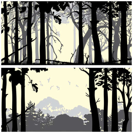 Panorama of wild coniferous forest backgrounds set