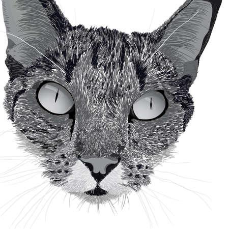 Illustration head of a cat