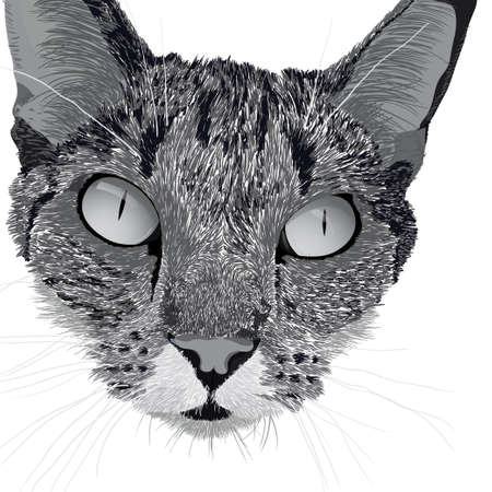 moggie: Illustration head of a cat