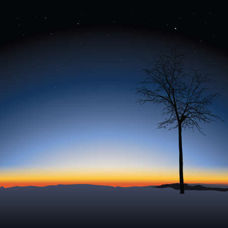 lonely tree: Lonely tree on Nature sunset background Illustration
