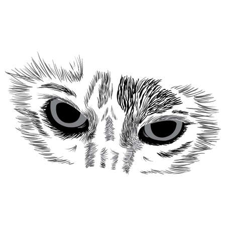 Vector illustration of face of a cat on white background