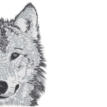 Wolf's face.  illustration