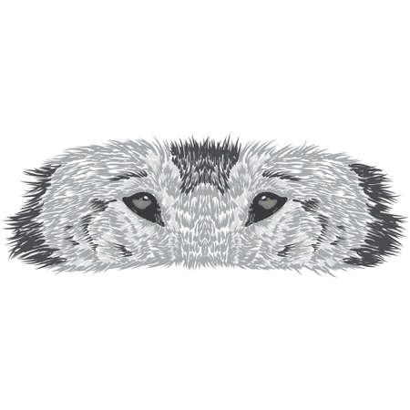 Beautiful wolf's face. illustration