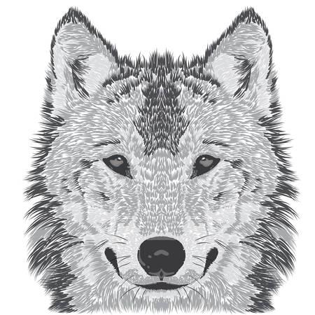 Beautiful wolfs face. illustration