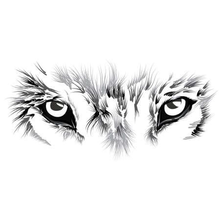 caritas pintadas: bello rostro del lobo. ilustración