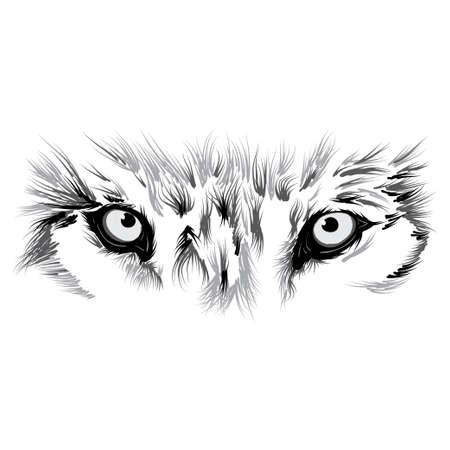 美しい狼顔。図  イラスト・ベクター素材