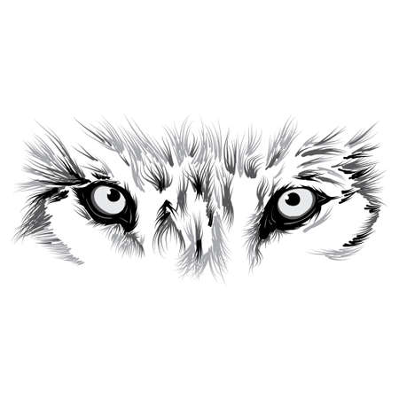 beautiful Wolf face. illustration