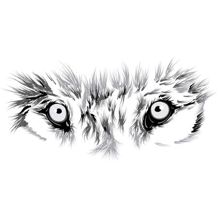 wolf face: beautiful Wolf face. Vector illustration