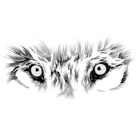 beautiful Wolf face. Vector illustration