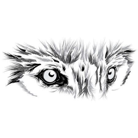 Wolf face. Beautiful Vector illustration
