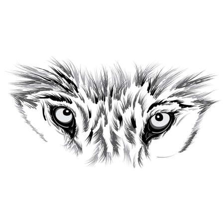 cara del lobo. Hermosa ilustración vectorial