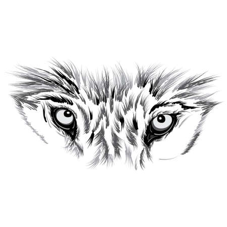 Wolf face. Beautiful Vector illustration