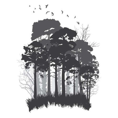Panorama of wild coniferous forest. Illustration