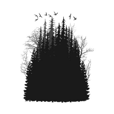 fog forest: Panorama of wild coniferous forest. Illustration
