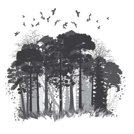 Panorama of wild coniferous forest. Vector illustration Çizim