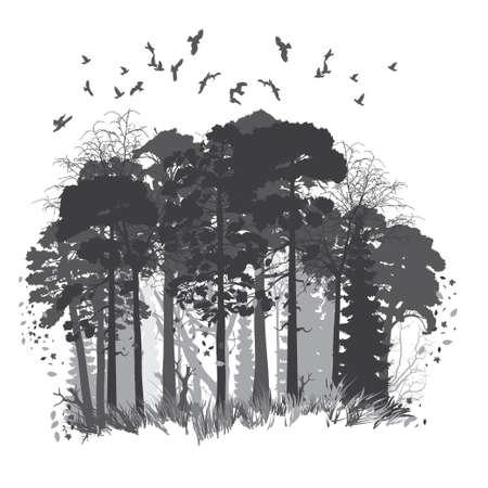 Panorama of wild coniferous forest. Vector illustration Stock Illustratie