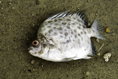 Close-up of a dead fish on a polluted beach