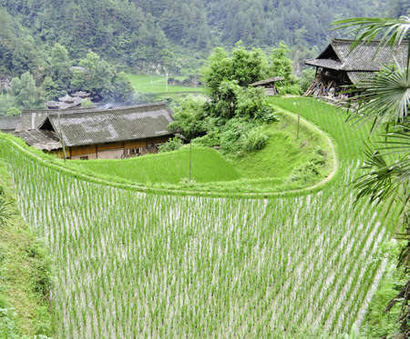 A small minority chinese village surrounded by rice terraces in guizhou