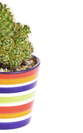 A small green cactus in a colorful rainbow pot isolated Stock Photo
