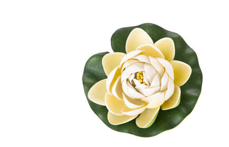 Water lily flower isolated on white background