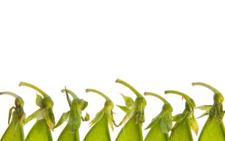 Isolated closeup of green pea pod tops Stock Photo