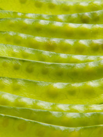 A close up of stacked green pea pods