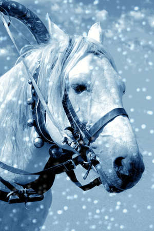 Horse in snow Stock Photo - 432677