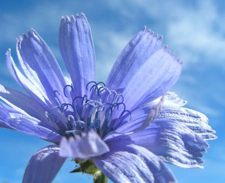Blue flower close-up photo